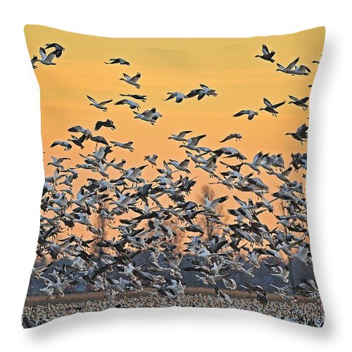 Geese Throw Pillow featuring the photograph Snow Geese by Kevin Pugh