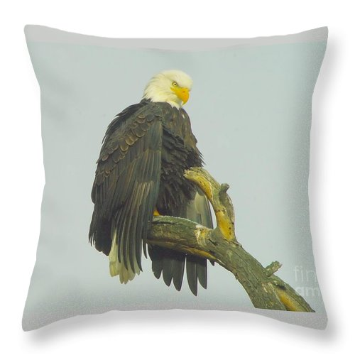 Eagles Throw Pillow featuring the photograph Stretching The Wings by Jeff Swan