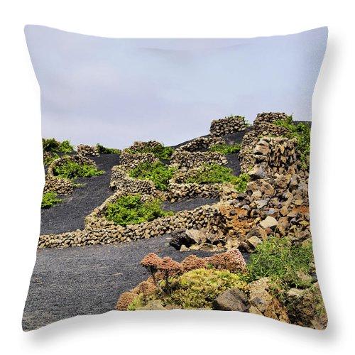 Vineyard Throw Pillow featuring the photograph Vineyard On Lanzarote by Karol Kozlowski