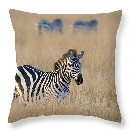 Africa Throw Pillow featuring the photograph Zebra by John Shaw