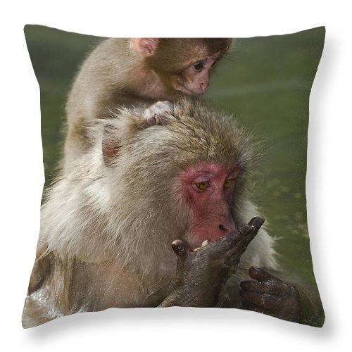 Asia Throw Pillow featuring the photograph Snow Monkeys, Japan by John Shaw