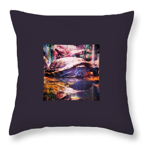 Turtle Throw Pillow featuring the photograph Padme the Turtle by Jenna Collier