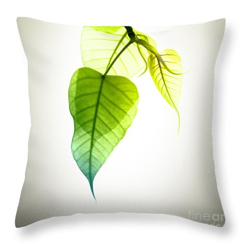 Abstract Throw Pillow featuring the photograph Pho Or Bodhi by Atiketta Sangasaeng