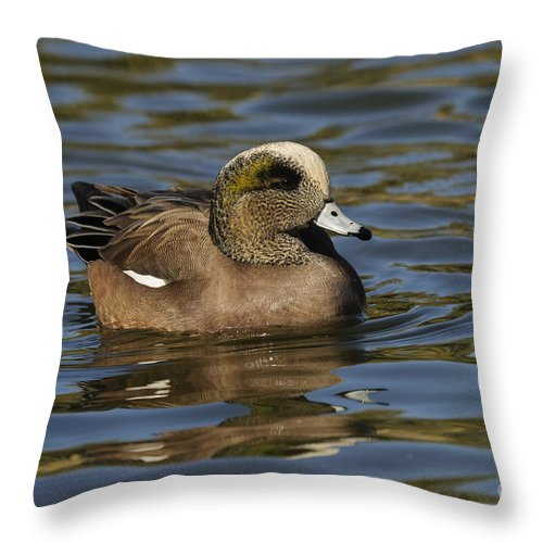 New Mexico Fauna Throw Pillow featuring the photograph American Widgeon by John Shaw