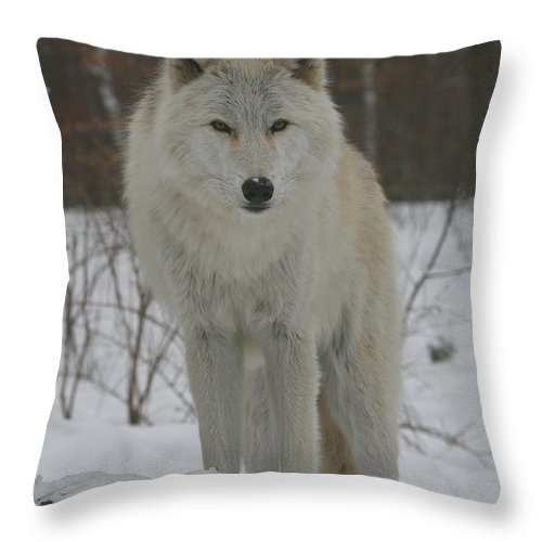White Throw Pillow featuring the photograph Arctic Wolf by Ken Keener