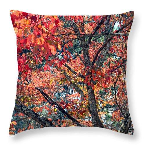 Autumn Throw Pillow featuring the photograph Autumn Leaves by Rafael Salazar