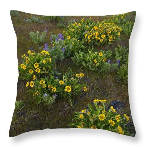 America Throw Pillow featuring the photograph Balsamroot by John Shaw