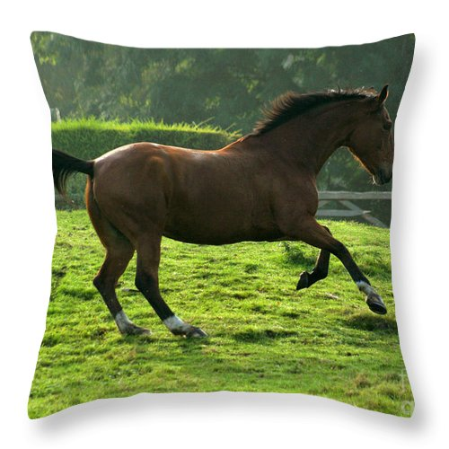 Horse Throw Pillow featuring the photograph Bay Horse by Angel Ciesniarska