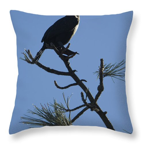 Nature Throw Pillow featuring the photograph Double-crested Cormorant by John Shaw