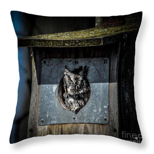 Bird Throw Pillow featuring the photograph Eastern Screech Owl by Ronald Grogan