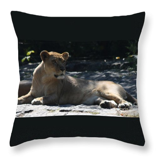 Female Lion Throw Pillow featuring the photograph Female Lion by John Telfer