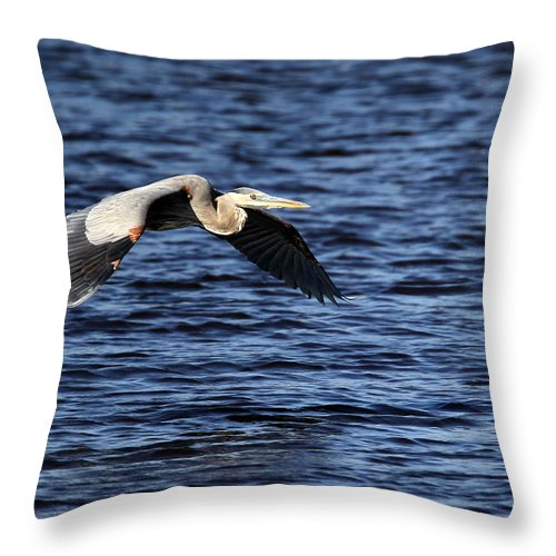 Great Blue Heron Throw Pillow featuring the photograph Great Blue Heron by Henry Gray