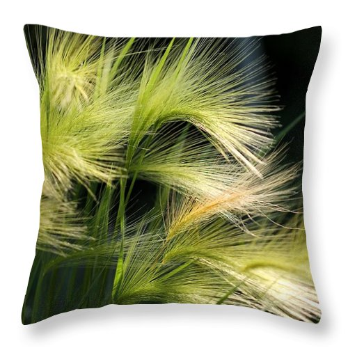 Mccombie Throw Pillow featuring the photograph Hordeum Jubatum Grass by J McCombie