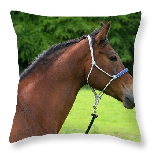Bay Horse Throw Pillow featuring the photograph Horse Portrait by Angel Ciesniarska