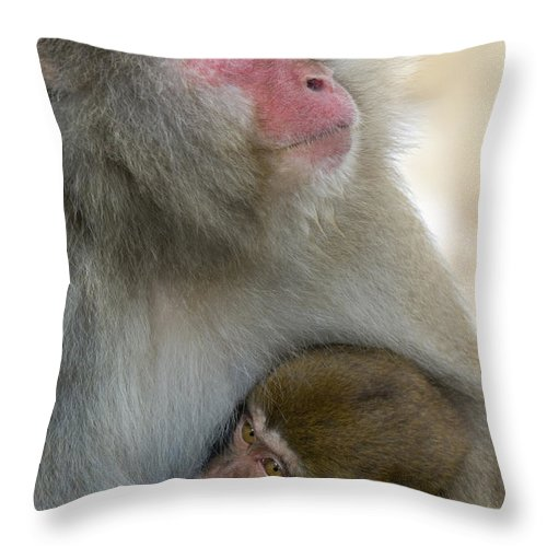 Baby Animal Throw Pillow featuring the photograph Japanese Macaques by John Shaw