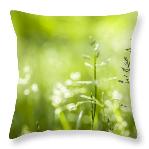 Green Throw Pillow featuring the photograph June Grass Flowering by Elena Elisseeva