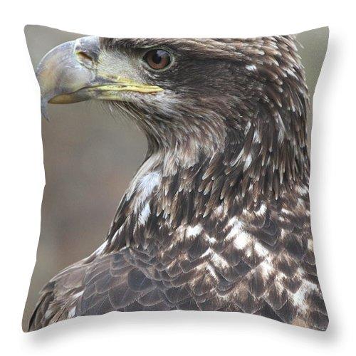 Juvenile Throw Pillow featuring the photograph Juvenile Bald Eagle by Ken Keener