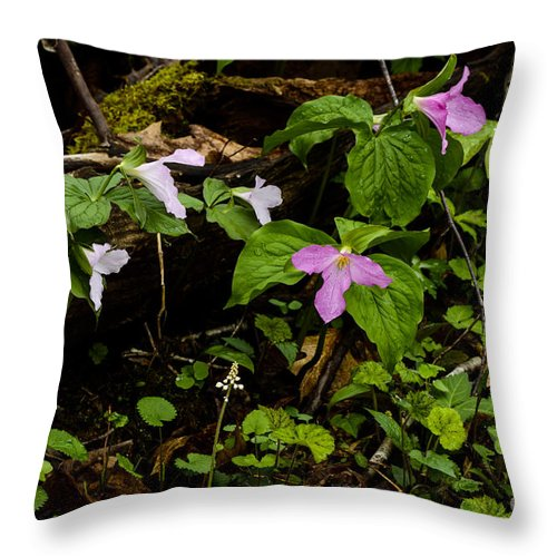 Large Flowered Trillium Throw Pillow featuring the photograph Large Flowered Trillium by Thomas R Fletcher