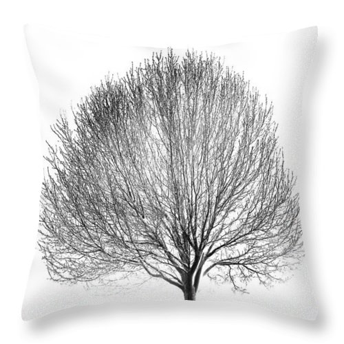 Tree Throw Pillow featuring the photograph White Night by Alexey Stiop