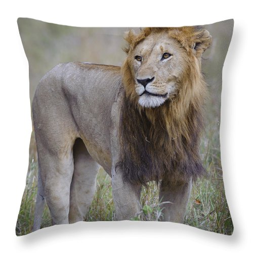Africa Throw Pillow featuring the photograph Male Lion by John Shaw