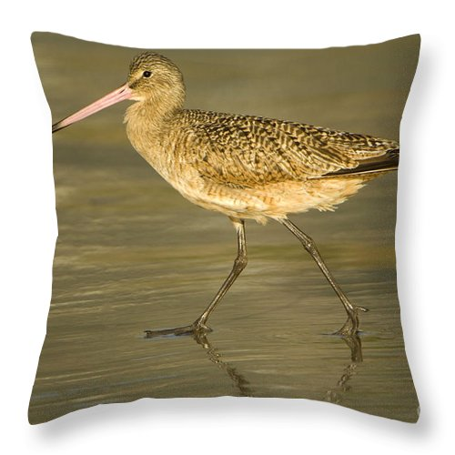 Nature Throw Pillow featuring the photograph Marbled Godwit by John Shaw