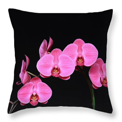 Orchids Throw Pillow featuring the photograph Orchids by John Lan
