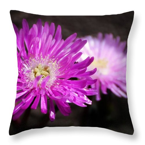 Close Up; Pink; Blossom; Sunlight; Nature; Plant; Flower; Garden; Background; Petals; Decorative; White; Throw Pillow featuring the photograph Pink by Werner Lehmann