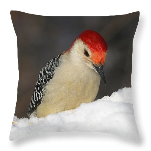 Woodpecker Throw Pillow featuring the photograph Red-bellied Woodpecker by Ken Keener