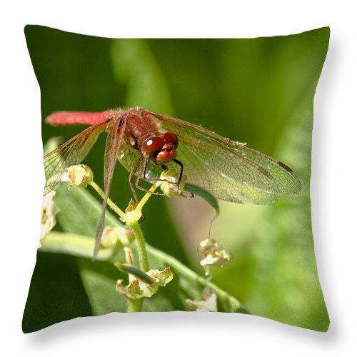 Dragonfly Throw Pillow featuring the photograph Red Dragonfly by Betty Depee