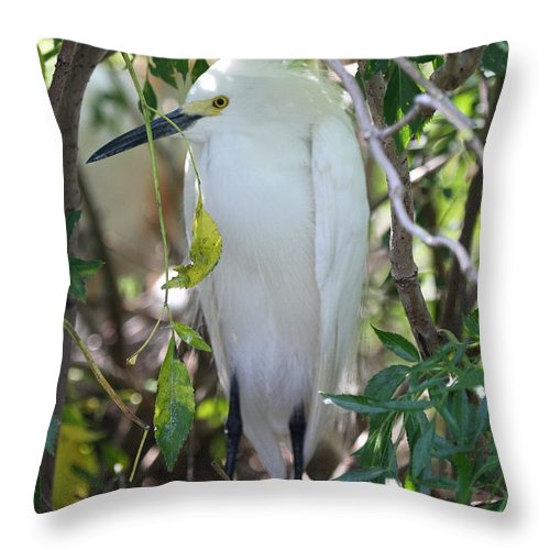 Snowy Throw Pillow featuring the photograph Snowy Egret by Ken Keener