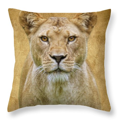 Lion Throw Pillow featuring the photograph Stare Down by Steve McKinzie