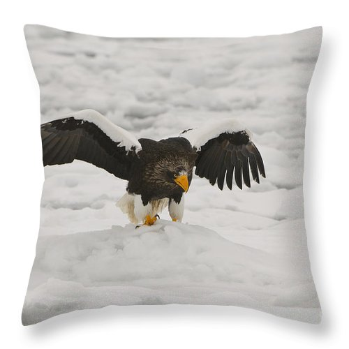 Haliaeetus Pelagicus Throw Pillow featuring the photograph Stellers Sea Eagle by John Shaw