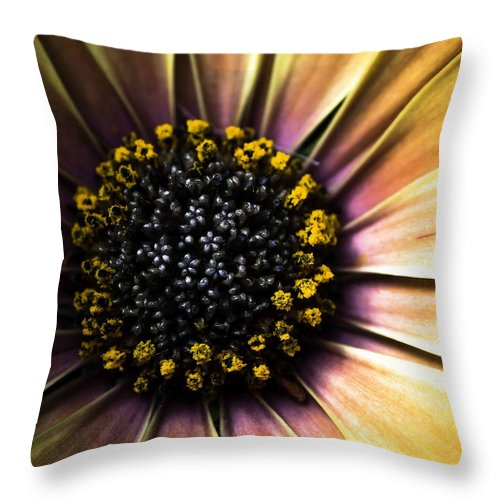 Floral Throw Pillow featuring the photograph Sunflower by Aza Johnson