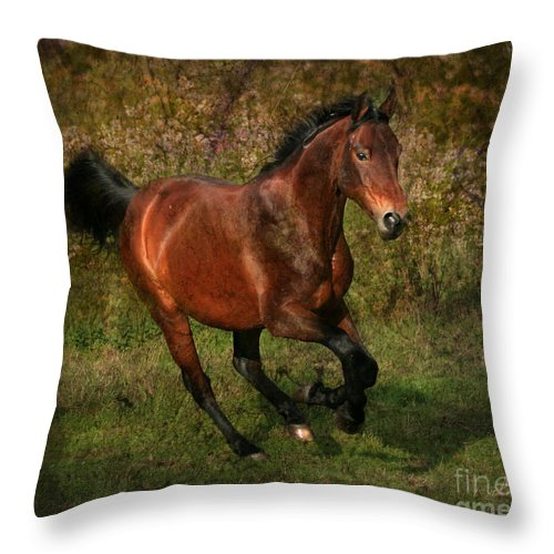 Horse Throw Pillow featuring the photograph The Bay Horse by Angel Ciesniarska