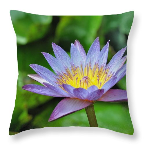 Water Lillies Throw Pillow featuring the photograph Water Lily 13 by Allen Beatty
