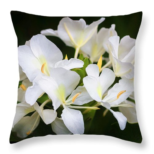 White ginger flowers h coronarium painted throw pillow for sale by white ginger throw pillow featuring the photograph white ginger flowers h coronarium painted by rich franco mightylinksfo