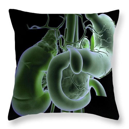 Cholecyst Throw Pillow featuring the photograph The Digestive System by Science Picture Co