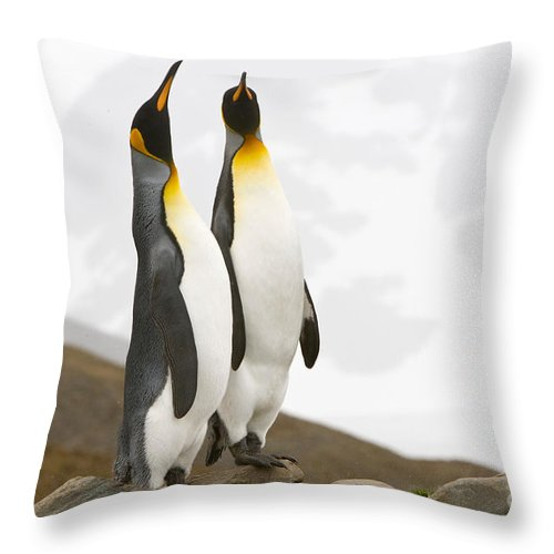 Animal Throw Pillow featuring the photograph King Penguins by John Shaw