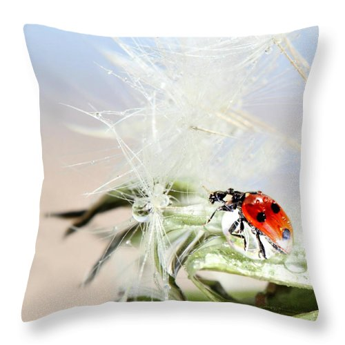 Drops Throw Pillow featuring the photograph Ladybug by Heike Hultsch