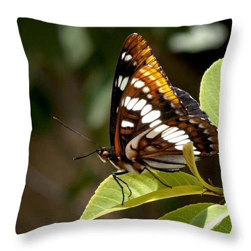 Butterfly Throw Pillow featuring the photograph Butterfly by Betty Depee