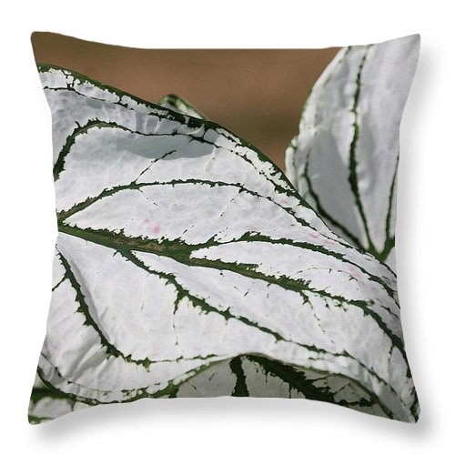 Caladium Throw Pillow featuring the painting Caladium Named White Christmas by J McCombie