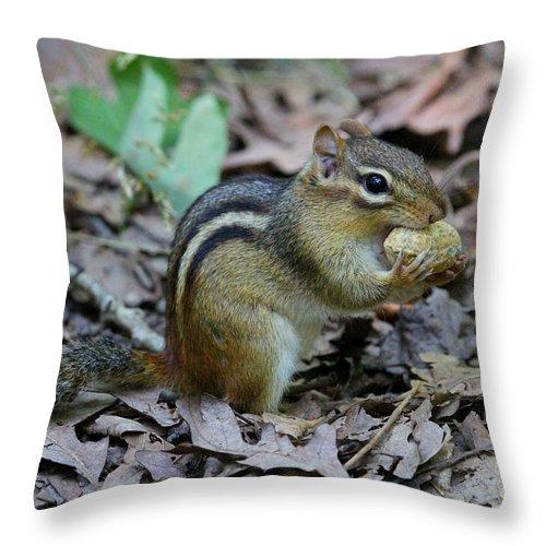 Chippie Throw Pillow featuring the photograph Chipmunk by Ken Keener