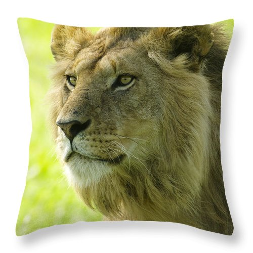 Lion Throw Pillow featuring the photograph Golden Boy by Michele Burgess