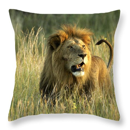 Lion Throw Pillow featuring the photograph King Of The Savanna by Michele Burgess