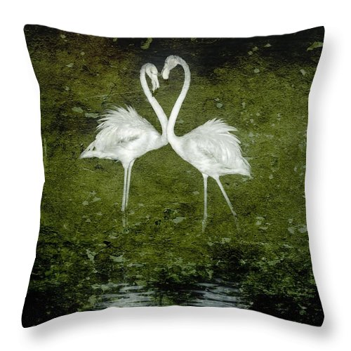 Lesser Flamingos; Feeding; Milnerton Lagoon; Early; Morning; South Africa; Cape Town; Birds; White; Nature; Wings; Feathers; Sunlight; Animals; Water; Flock; Background; Black & White; Texture; Throw Pillow featuring the photograph Love Is by Werner Lehmann