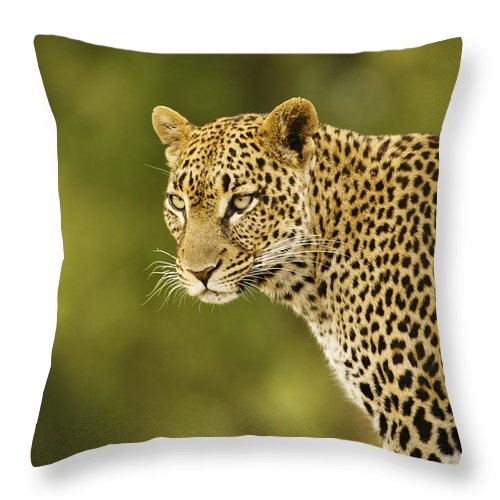 Africa Throw Pillow featuring the photograph Lovely Leopard by Michele Burgess