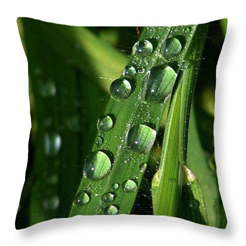 Rain Throw Pillow featuring the photograph Raindrops by Carol Lynch
