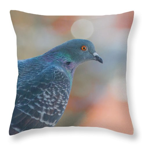 Animal Throw Pillow featuring the photograph Rock Dove by Jivko Nakev
