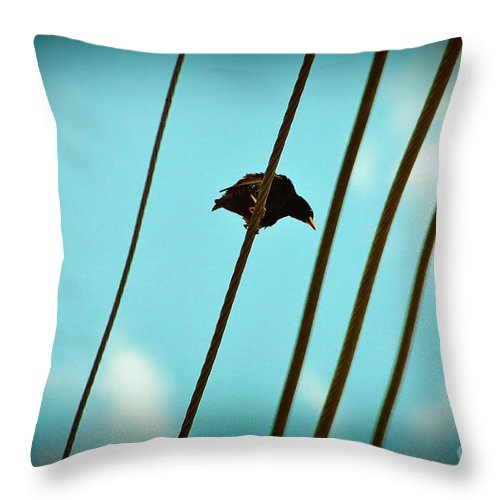 Starling Throw Pillow featuring the photograph 5 Wire 2 by Lynda Dawson-Youngclaus