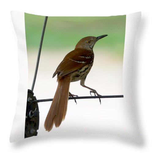 Birds Throw Pillow featuring the photograph Brown Thrasher by Lori Tordsen